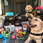 Hurricane Harvey, dogs, cats, donations, supplies