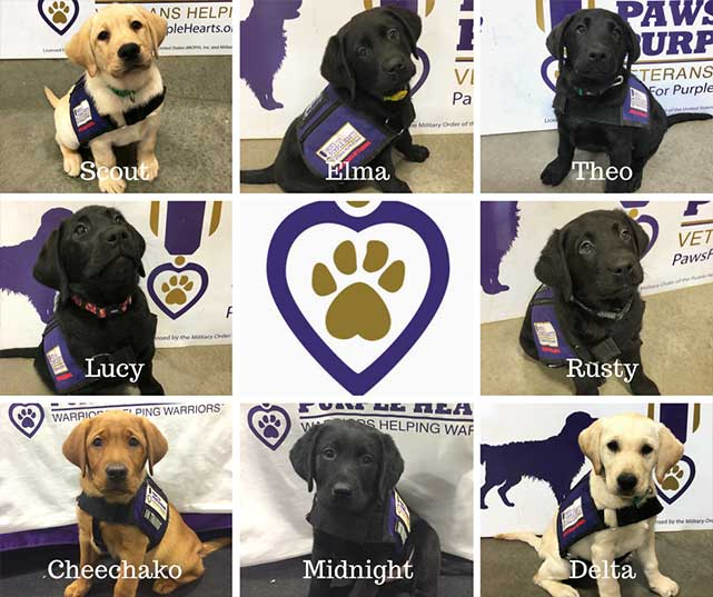 Eight new service puppies in training joined our program in January 2018 from our partner Project2Heal