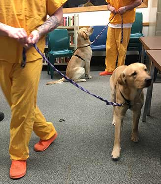 Littermates, Buck and Russell practicing commands with Veterans at FCC