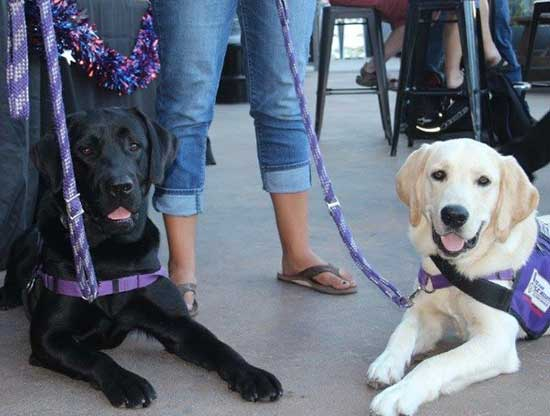 train service dogs to provide to Warriors facing challenges