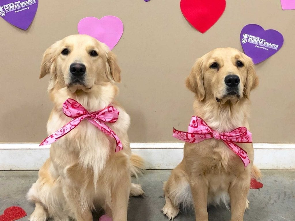 Service Dogs in Training Ronnie in Joan dressed for Valentine's Day
