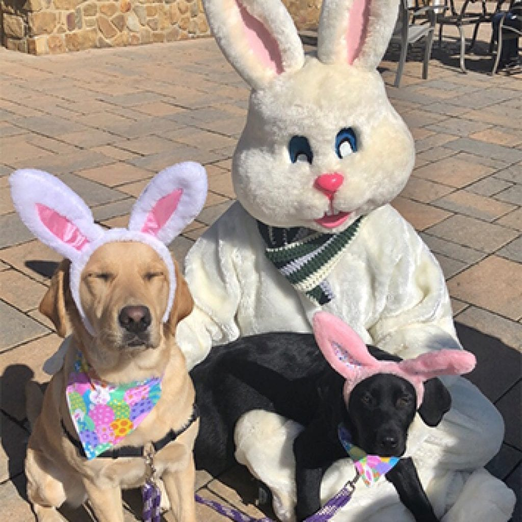 #pphAutumn and #pphElma meet the Easter Bunny at Boulder Crest Retreat