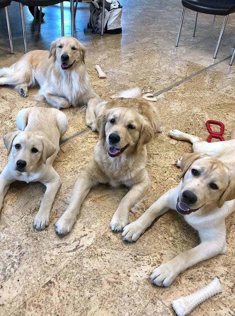 Service dogs in training at USO Warrior and Family Center at Fort Belvoir