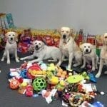 Dogs with Donation from Girls State Camp
