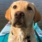 Juneau on the water during a paddleboard training session.""