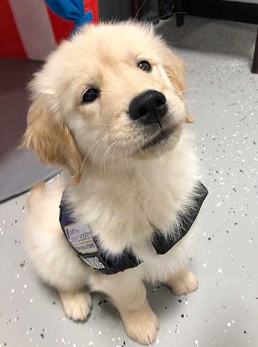Commands start early for Service Dogs