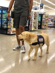 #pphScout practicing Loose Leash Walking in Food Lion grocery store!