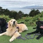 Paws Spark Laughter in the Bay Area