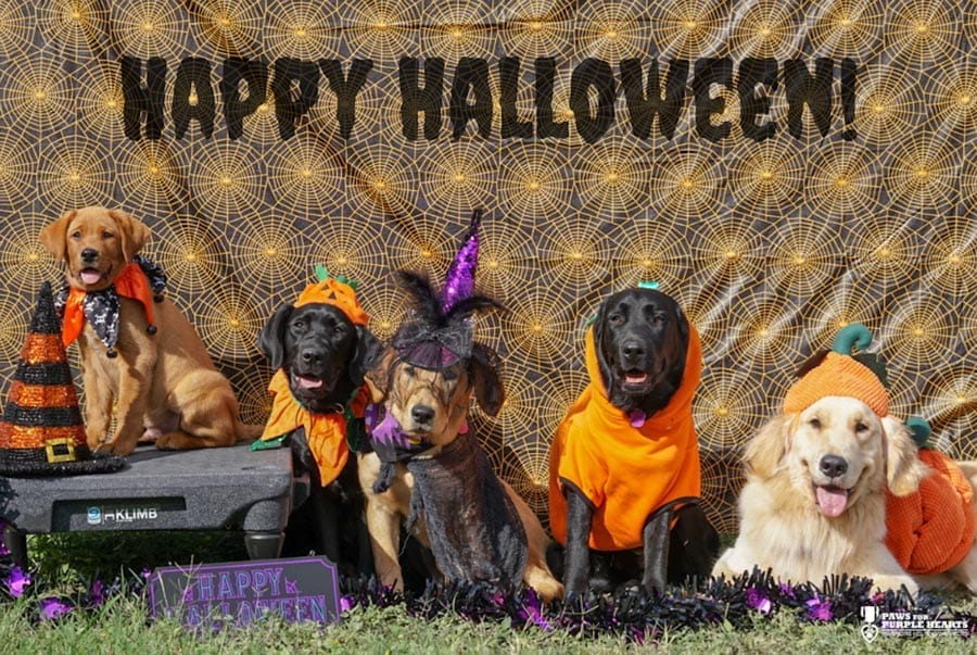PPH San Antonio Service Dogs In Training wish you a Happy Halloween!