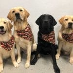A few of our service dogs in training dressed for Thanksgiving!