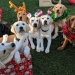 Our eight dogs in San Diego pose for to celebrate the holiday