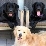 Timmy, Schatzie, & Ozzy