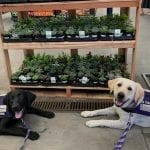 San Diego pups, Sandy and Delta, visit Home Depot for a field trip