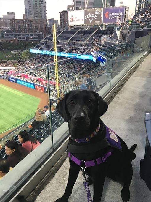 A PPH pup takes an exciting field trip to a Padres baseball game