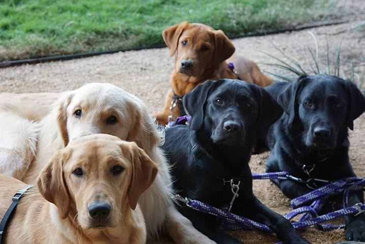 San Antonio Pups