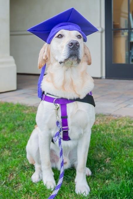 Graduate Ralph