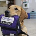 What is a Facility Dog?