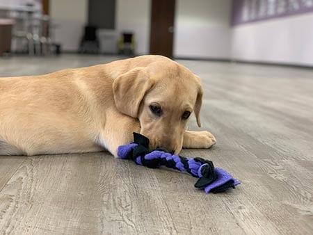 Berney loves braided tug toys
