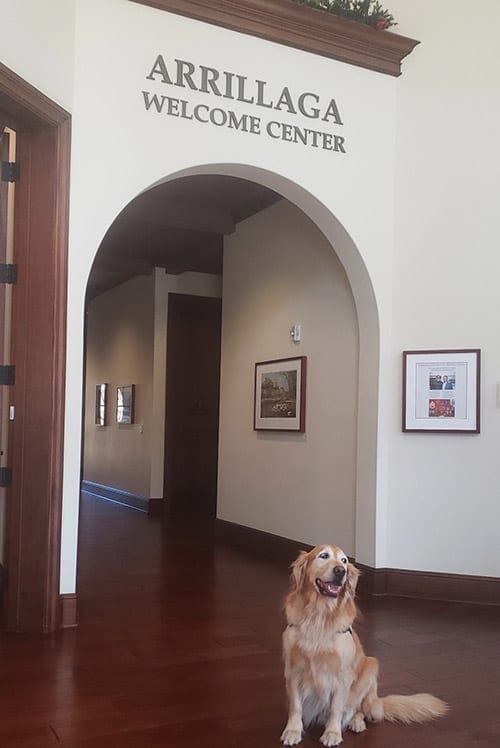 Facility Dog, Webb, works at a Veterans Affairs Welcome Center