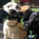 From tug toys, to agility equipment, we will gladly accept projects created by generous supporters!