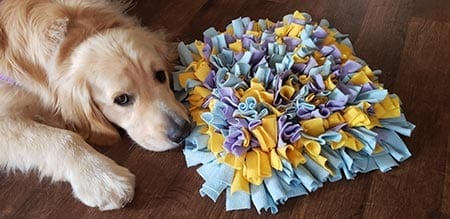 Ozzy loves his snuffle mat