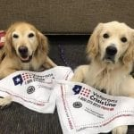 Specialist Therapy Dogs Improve Patient Care