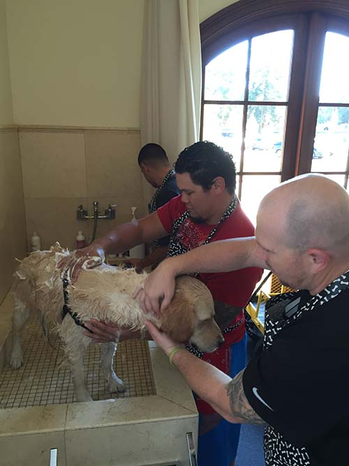 Warriors in Menlo Park bathing and grooming future service dogs