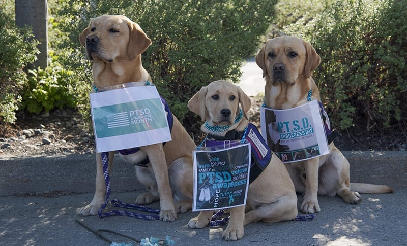 Reagan, Andi, and Melik spread awareness about PTSD