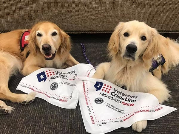 Facility dog Webb with future service dog Ozzy