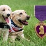 Happy National Purple Heart Day