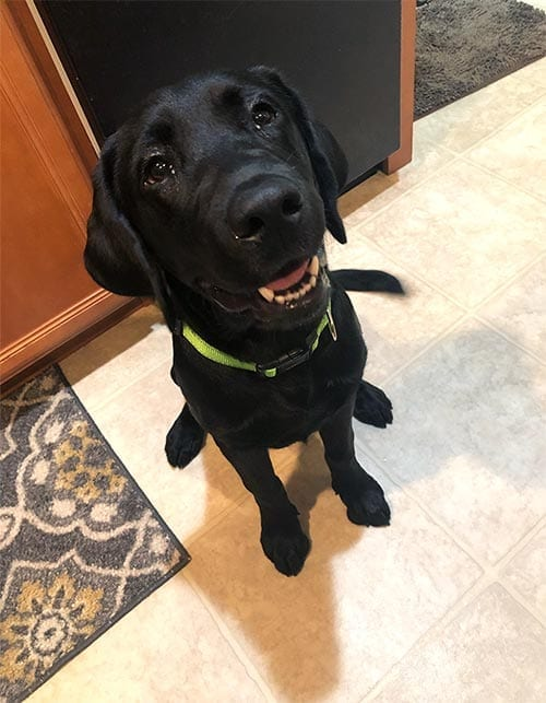 At six months old, Beo is keeping his chin up and smiling.