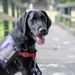 Future PPH Service Dog