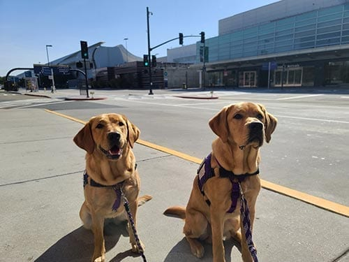 Libby and Arri get paws-on experience navigating their way through the Mineta San Jose International Airport!