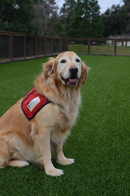Webb was the first Paws for Purple Hearts dog to be placed in a VA facility.