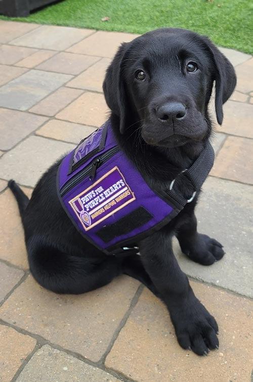 PPH Chapman in his service dog vest