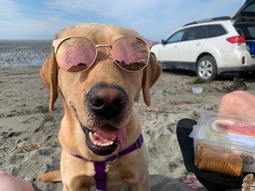 PPH Reagan enjoying the warm sun at the beach in Alaska