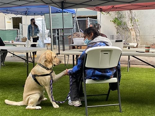 PPH San Diego hosts on-site canine-assisted therapy