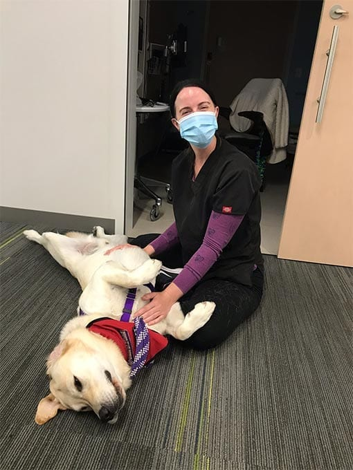 Ralph gets a belly rub from a VA nurse