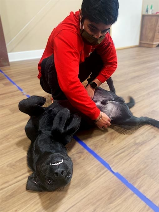 Petting dogs can reduce stress and alleviate symptoms of PTSD and TBI