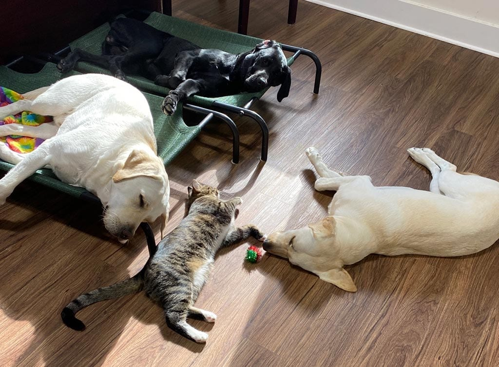 PPH Ruther Glen pups nap with Pepper the cat