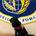 """Elma Update: Specialist Service Dog Supporting Air Force Squadron """"Way Up North"""" Author: Julia Roberts, Advancement Associate"""