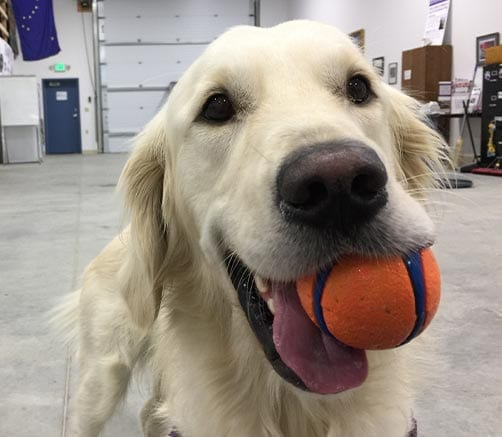 helps provide toys and chews to keep a PPH pup happy for their entire training journey