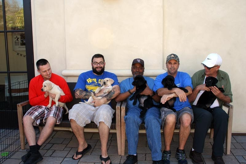 Our puppies start training with Warriors at 4 weeks old.