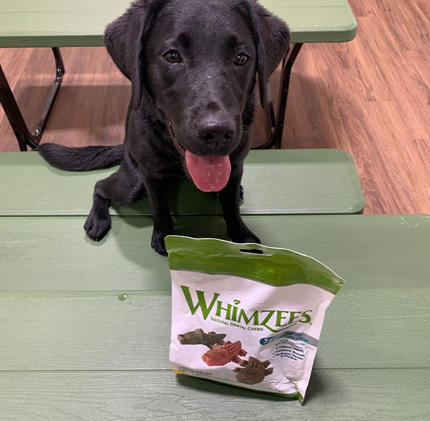 Whimzees help keep our dogs teeth healthy!