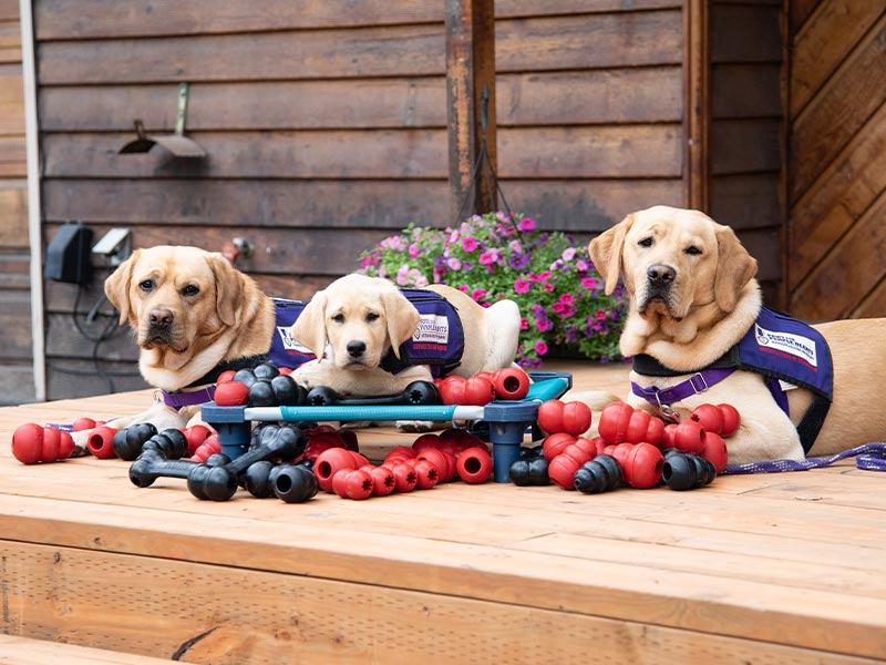 You can never have enough kongs!