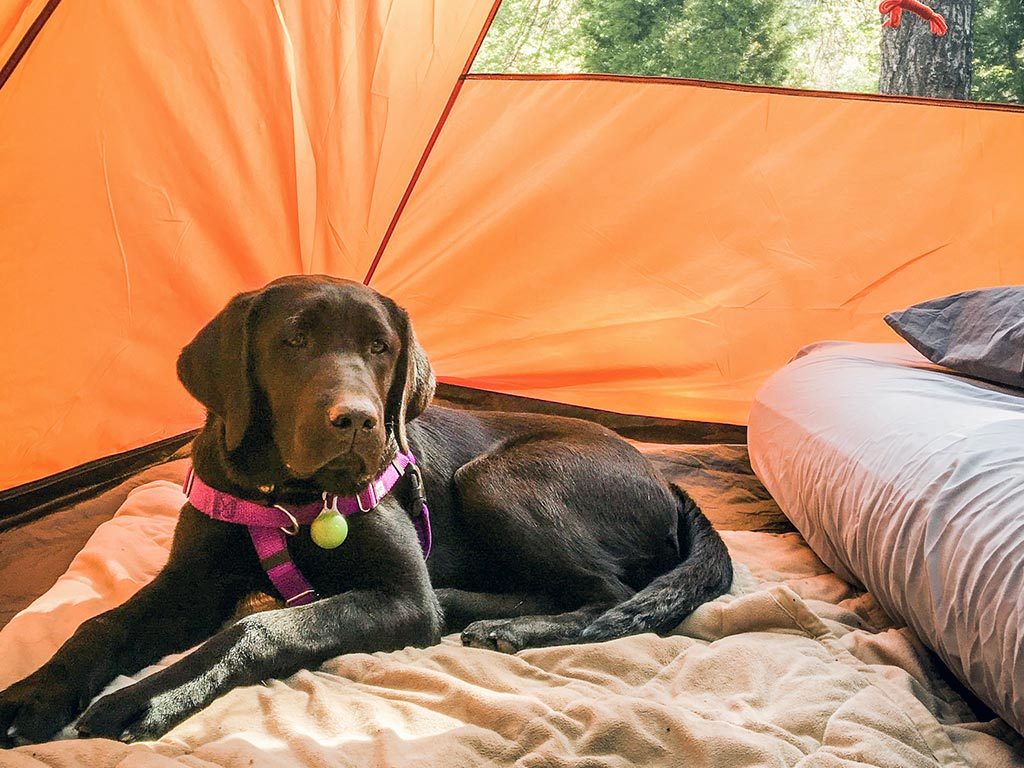 #pphReid loves camping with his puppy parents